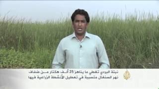 استخلاص فحم صديق للبيئة في موريتانيا
