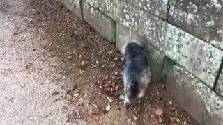 犬の散歩.