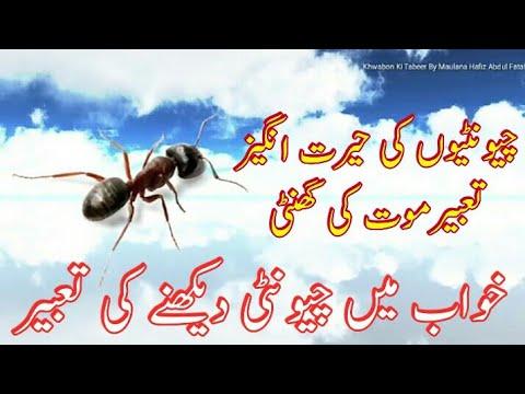 Khwab Mein Chuntiyan Dekhna || Khwab Mein Chunti Dekhna Ki Tabeer || Ant  Dream || Ants Dream Islam