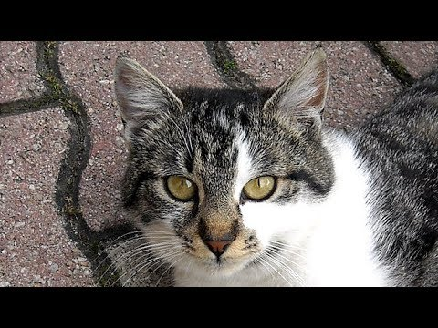 Mother Cat and Kittens / Beautiful Domestic Cat / Cute and Lovely Cat