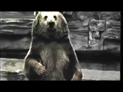 Growing Up in Detroit in the 70s: Detroit Zoo