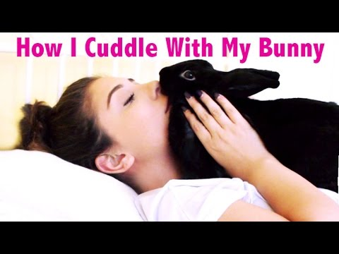 How I Cuddle With My Rabbit