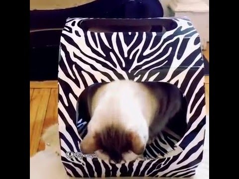 How to keep cats off furniture YouTube