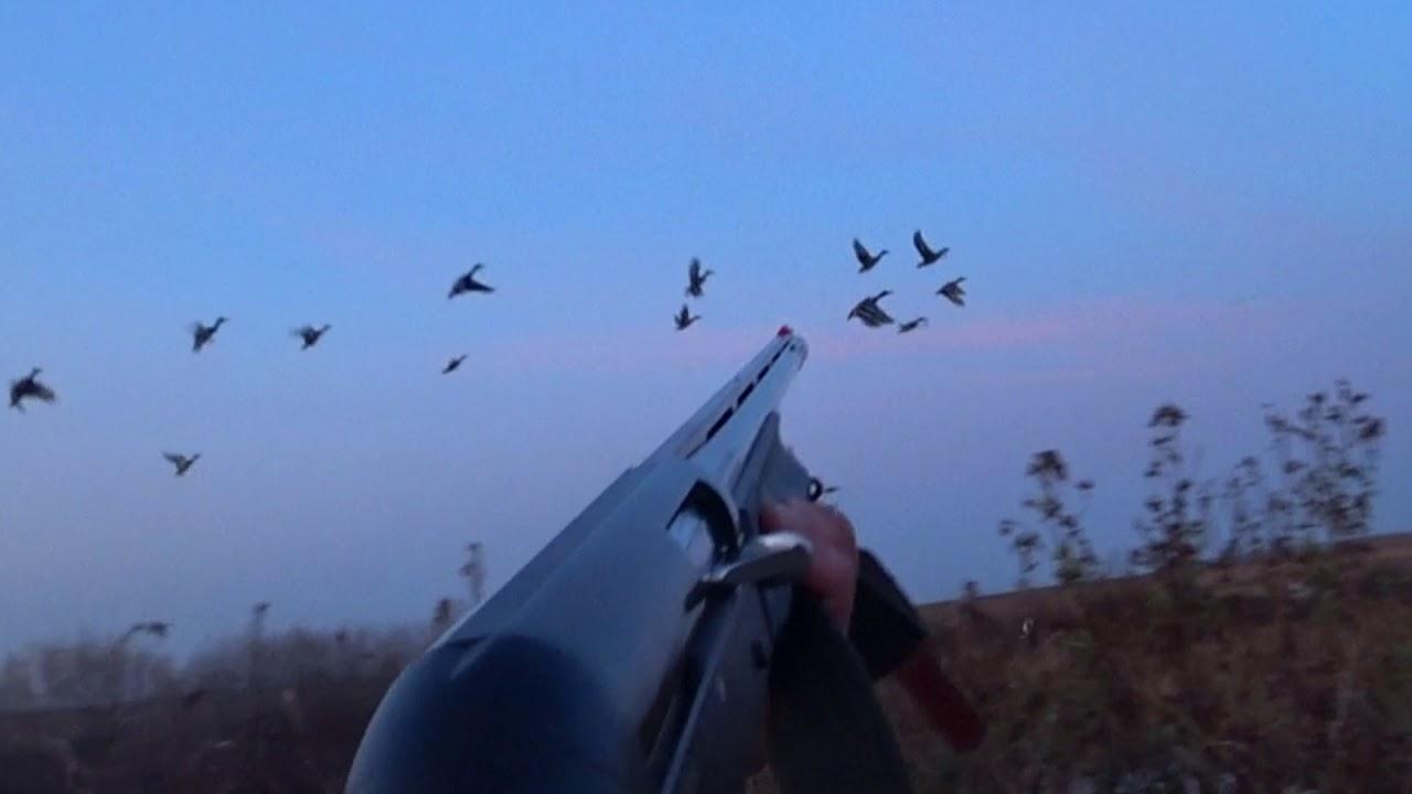 Отличная охота на утку осенью 2019 + ТРОФЕЙНЫЙ ЛОСЬ !!!!