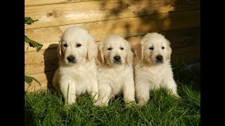 ***How To Potty Train A Puppy Free-Mini Course***