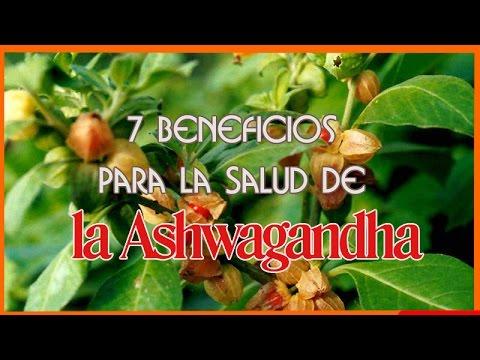 La Ashwagandha - 7 Beneficios para la Salud de la Ashwagandha (withania somnifera)