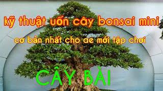 Kỹ thuật uốn cây bonsai mini ( cây bài) P.1 _ Mẫn bonsai