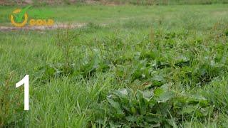 Grass into Gold odc. 1 - Jak poprawnie dokonać renowacji łąki lub pastwiska.