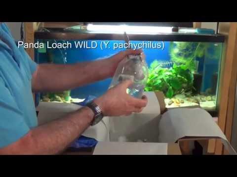 Wet Spot Tropical Fish Order Arrives