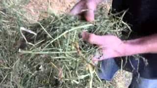 Les aliments constituant la ration des vaches laitières de Grignon
