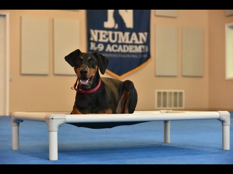 Nova (Doberman) Boot Camp Dog Training Video Demonstration