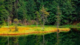 Рыбалка и охота в Карелии. Лето 2015. Трэш! Угар! 18+! Смотреть полностью!(Поездка в карельские леса на 2 ночи с Михаилом. Озеро