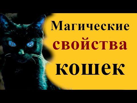 Магические свойства котов и кошек
