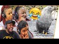 Download 😱Fam Reacts Ep.1 - Seal FORCES Itself On Penguin!