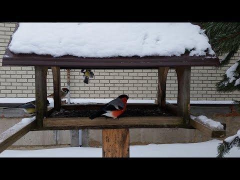91 Кормушка зимой   снегири, воробьи, синицы