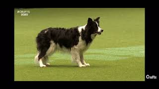 bring me to life #crufts