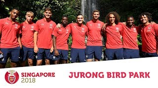 'I'm a bird catcher!' | The boys visit Jurong Bird Park | #AFCTour2018