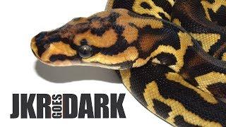 Gambar cover JKR GOES DARK! - The Dark Knight Rises + My first contest!