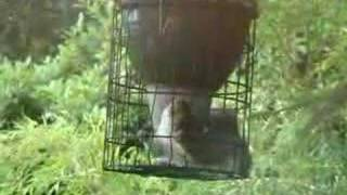 Squirrel-proof Bird Feeder Escape