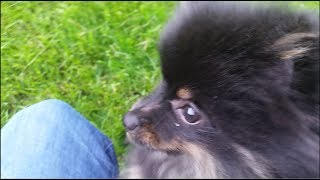 Cute Fluffy Puppy Jack Plays Tag
