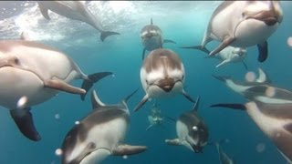 GoPro: Swimming with Dolphins - Santa Cruz, CA