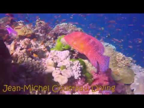 Colorful Fiji diving - Romancing The Globe Travel Blog