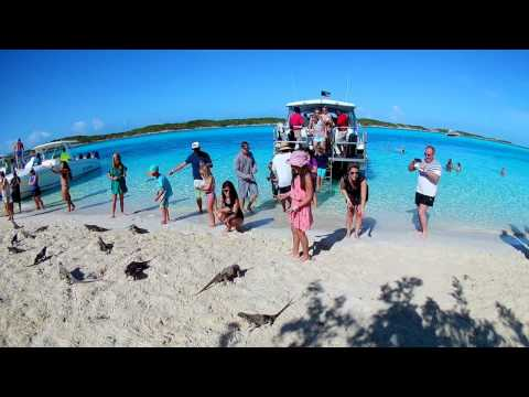 Iguana feeding - Allen's Cay, the Exumas