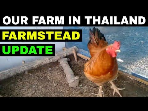 THAILAND FARMING UPDATE Living in Thailand rural areas CHEAP THAILAND Agriculture