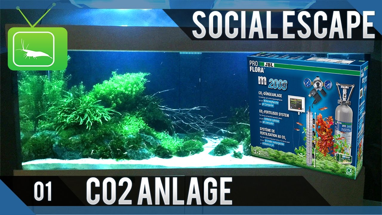aquascaping social escape tag 1 installation co2 anlage youtube