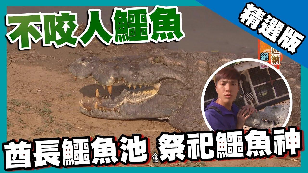 【迦納】帕加鱷魚池 200隻鱷魚性格溫馴如家犬|《世界第一等》628集精華版