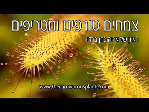 צמחים טורפים ומטריפים, אריה כהן בראיון בגל