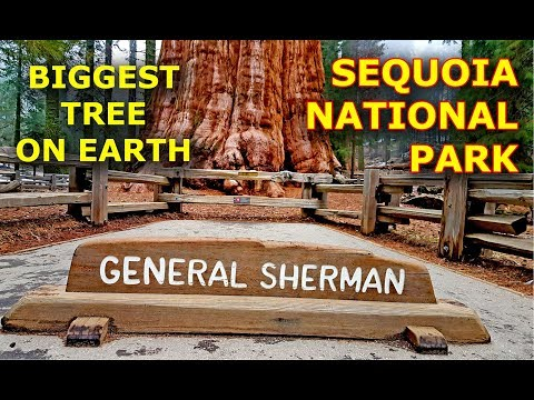 General Sherman Tree biggest tree on Earth Sequoia National Park California