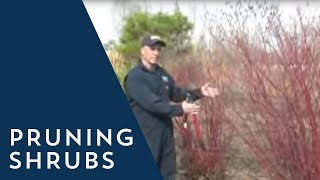 How to Prune a Shrub