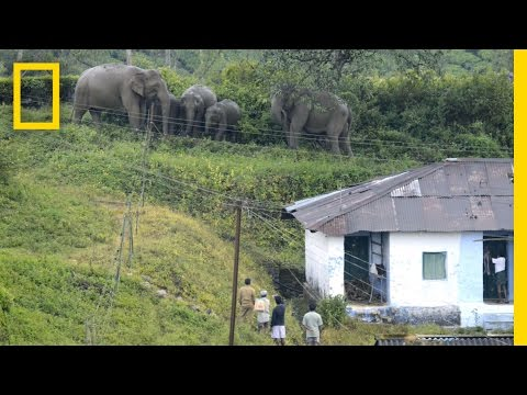 Text Messaging Helps Elephants and People Coexist | National Geographic
