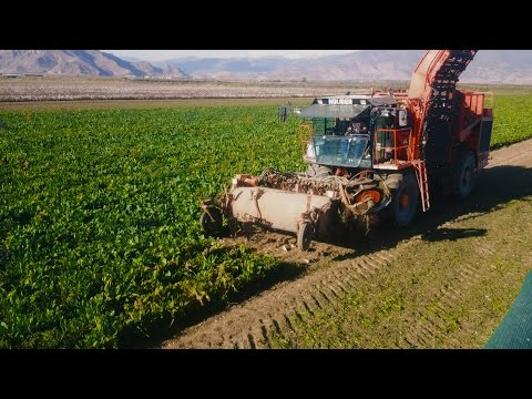 Holmer T2 - Sugar Beet Harvest Greece