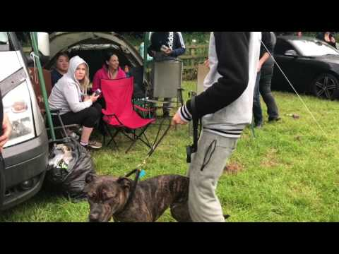 Dog sex mounts guy on command