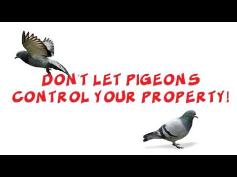 pigeonpros-of-nevada-|pigeon-control-in-the-vegas-metro-area-702-382-0422
