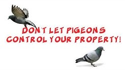 Pigeonpros of Nevada |Pigeon Control in the Vegas Metro Area 702-382-0422