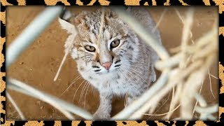 Sneaky sneaky. About the wild animal facility - http://carerescuete...