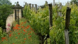 French Wines Going Organic
