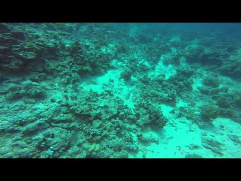 2015-01-23 Third Dive at Red Sea, Yanbu, Saudi Arabia