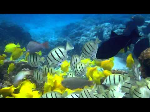 Kahalu'u Beach Snorkeling