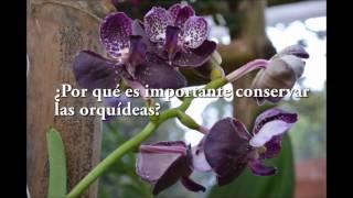 Exposición de orquídeas en el Jardín Botánico de Bogotá