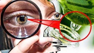Простой Рецепт для тех, кто хочет Укрепить Зрение