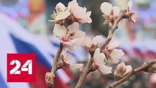 В Севастополе прошел многотысячный митинг в честь Крымской весны - Россия 24