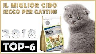 Il Miglior 🔥 Cibo Secco Per Gattini 😸 TOP-6 🔥