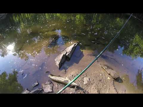 Snakehead Fishing Savage Mill 6/08/17