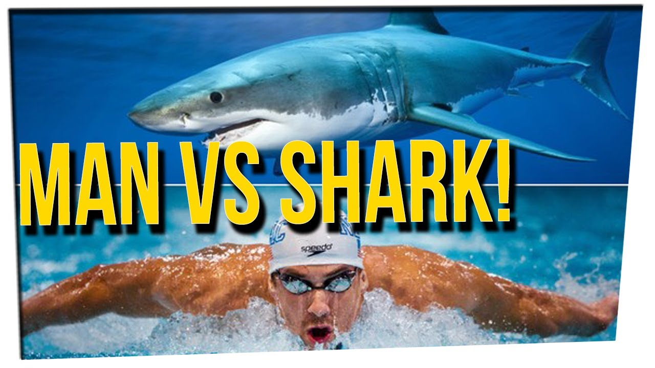 weekend-scramble-michael-phelps-planning-to-race-great-white-shark-ft-davidsocomedy