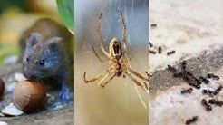 Pest Control Rio Vista TX 76093 Ant Control