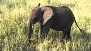 Travel with the Palm Beach Zoo: Elephants in Tanzania 2010